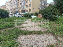辰宇新村一期  南北标户 随时看-绿化绿地